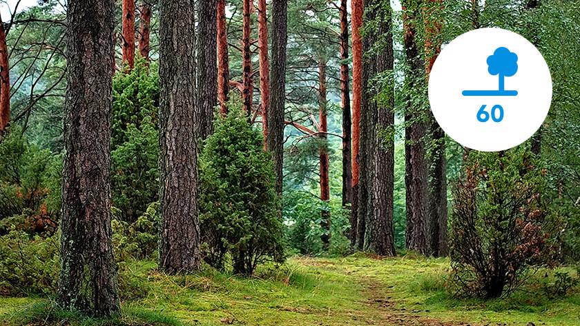 Für den CO2-Ausstoß benötigte Anzahl an Bäumen